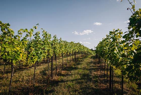 Region Weingärten